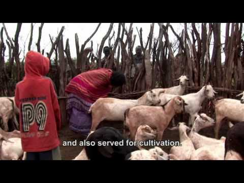 Livestock, life and livelihoods among women and men in East Africa