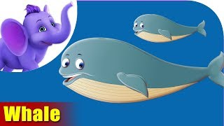 Whale Rhymes, Whale Animal Rhymes Videos for Children