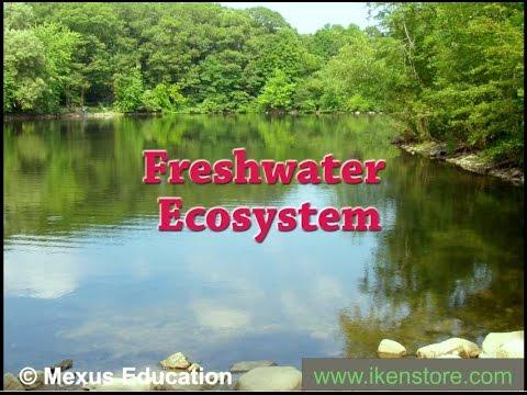 Freshwater Ecosystem | Iken Edu - YouTube