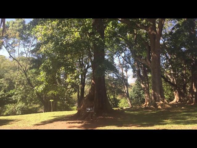 Bezoek Botanical Garden in Kandy