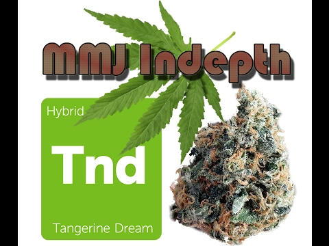 MMJ InDepth hybrid strain review: Tangerine Dream