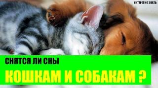 Снятся ли собакам и кошкам сны?