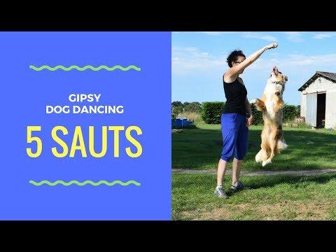 5 sauts faciles à faire avec son chien - Dog dancing - Berger australien