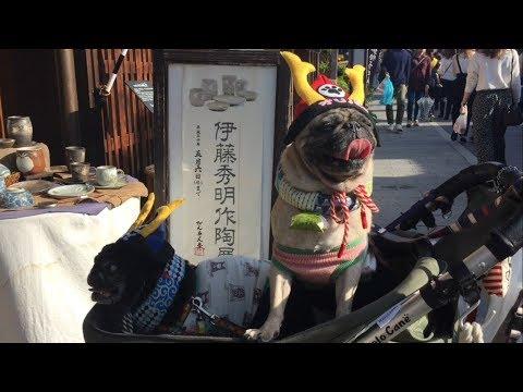 The mysterious Ise-Jingu, Japan's most important shrine