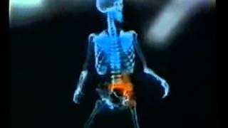 видео Анатомия скелета человека: фото, описание, функции костей и мышц человеческого скелета, типы и отделы скелета