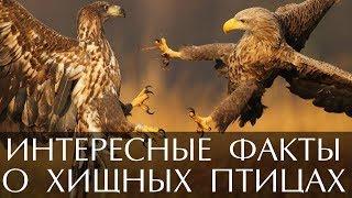 Интересные факты о хищных птицах