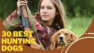 30 best hunting dogs for hunts & games. From American Foxhound to Weimaraner dog breed.