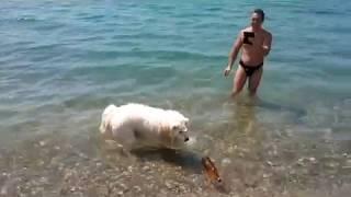 Самоед впервые на море