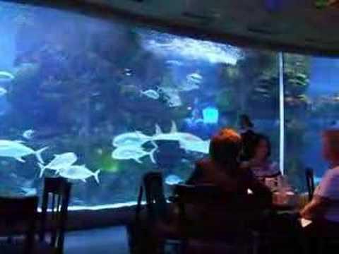 Aquarium Restaurant Nashville Tn Youtube
