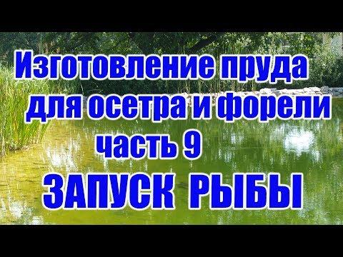 Изготовление пруда для осетра и форели (часть 9) ЗАПУСК РЫБЫ