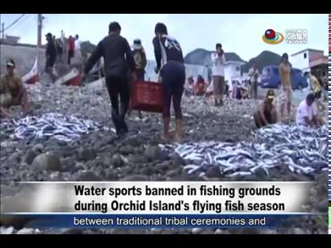 蘭嶼飛魚季期間嚴禁潛水等活動 Water sports banned in fishing grounds during Orchid Island's flying fish season—宏觀英語