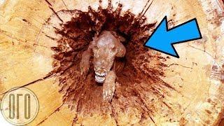 Лесорубы Не Могли Поверить Своим Глазам, Когда Нашли в Дереве ЭТО!