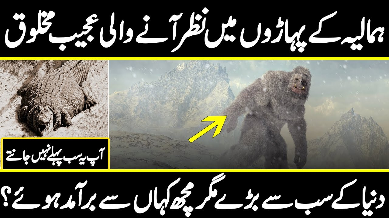 Mystery of the Himalayan YETI, Do YETI really exists ? | Urdu Cover