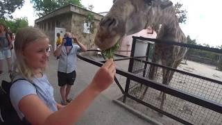 СУПЕР! Парк львов Тайган в Крыму