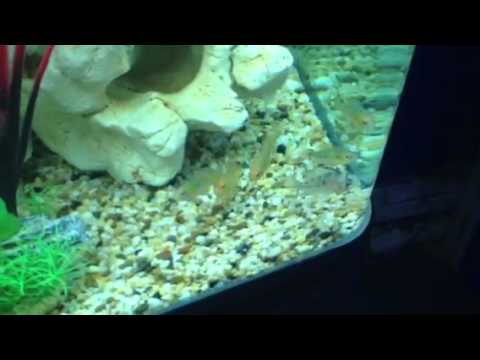 Check out an aqua one 980T mixed american cichlid tank