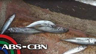 Mga mangingisda sa Zambales umaaray sa oil spill   TV Patrol