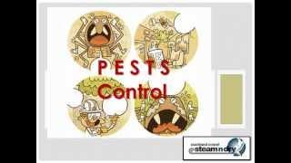 Flea Control Pests pests control