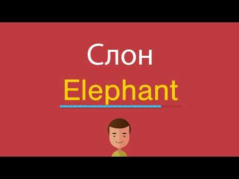 Как по английскому будет слово слон