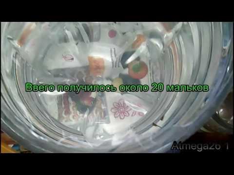 Видео Генетика и селекция тюльпанов