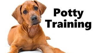 How To Potty Train A Rhodesian Ridgeback Puppy - House Training Rhodesian Ridgeback Puppies Fast