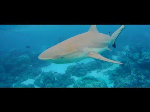 Moorea + Bora Bora Honeymoon