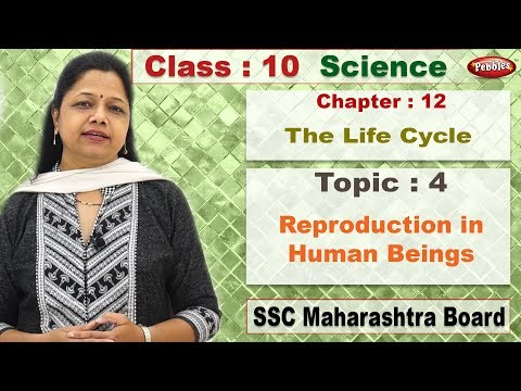 Class 10 | Science 2 | Chapter 12 | The Life Cycle | Topic 04 | Reproduction in Human Beings