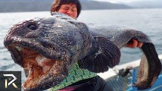 Terrifying Sea Creatures That Actually Exist