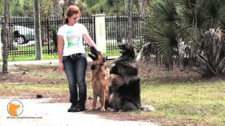 Fine-tuned Canines : Naples Florida Dog Training And Dog Psychology. Your Dog's Canine Oasis.