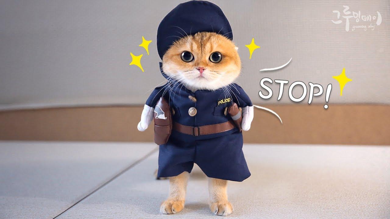 코스프레를 준비하는 귀여운 고양이