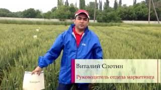 Фунгицид Аканто® Плюс против пиренофороза и ржавчины