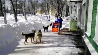 По Новокузнецку ходят стаи бездомных собак. Когда начнут с ними бороться? Ждем жертву?