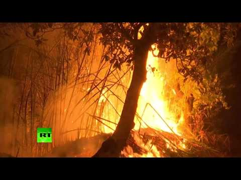 Ongoing wildfire in Portugal covers 5 times more forest than average