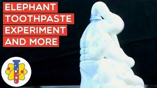 Largest Elephant Experiment | Amazing Science Experiments |  Lab 360