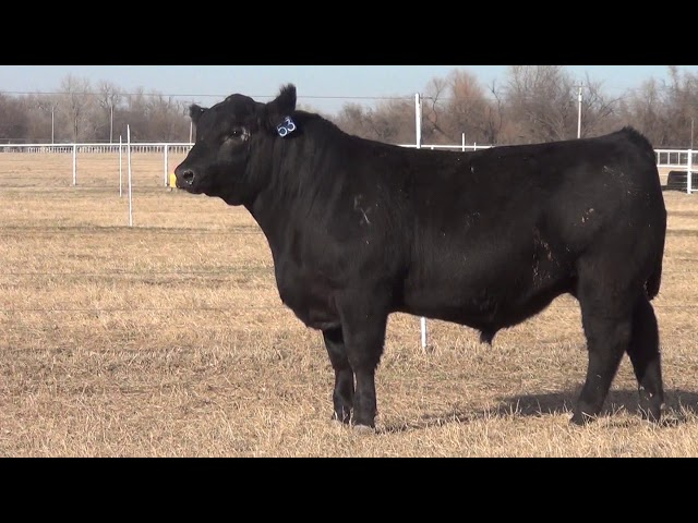 Express Ranches Lot 53