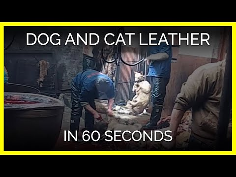 Dog and Cat Leather in 60 Seconds
