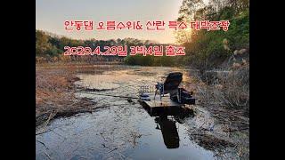 안동댐 오름수위,산란특수 대박조황