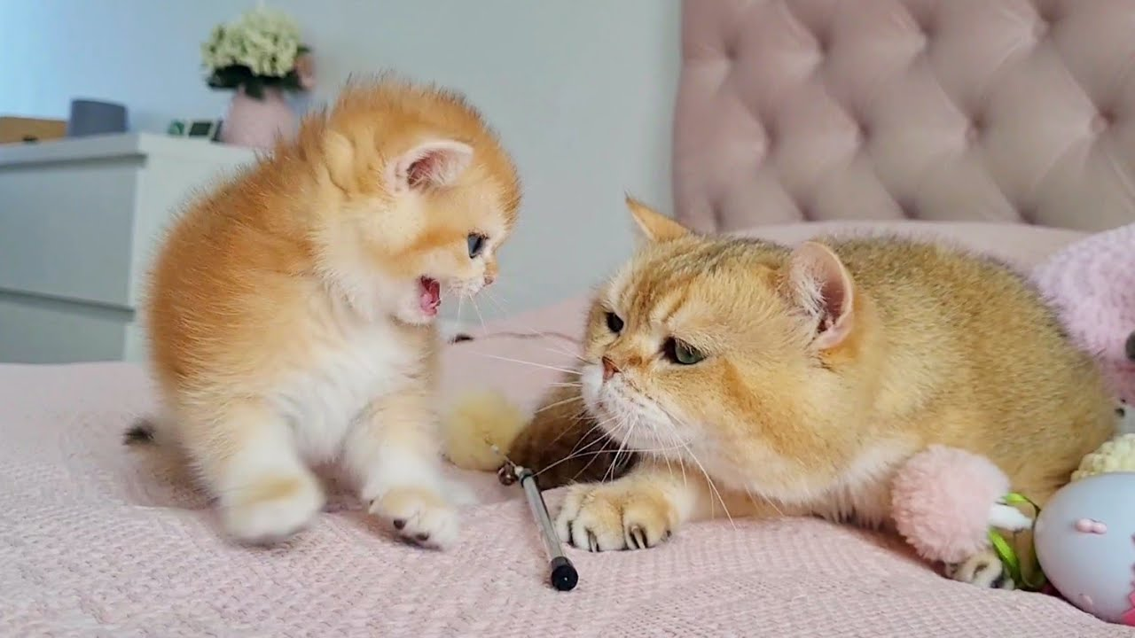 Kitten Melania saw William for the first time ☺️