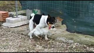 Пёс извращенец