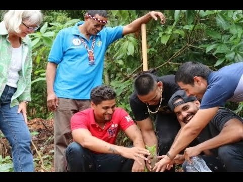 Tree Planting and Reforestation Initiative On World Environment Day 2017