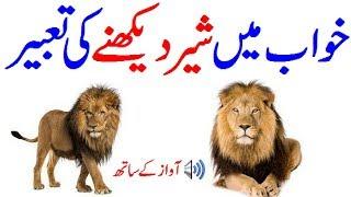 Khawab Mein Sher Dekhna Khawab Mein Sher Dekhnany Ki Tabeer See Dream In Lion