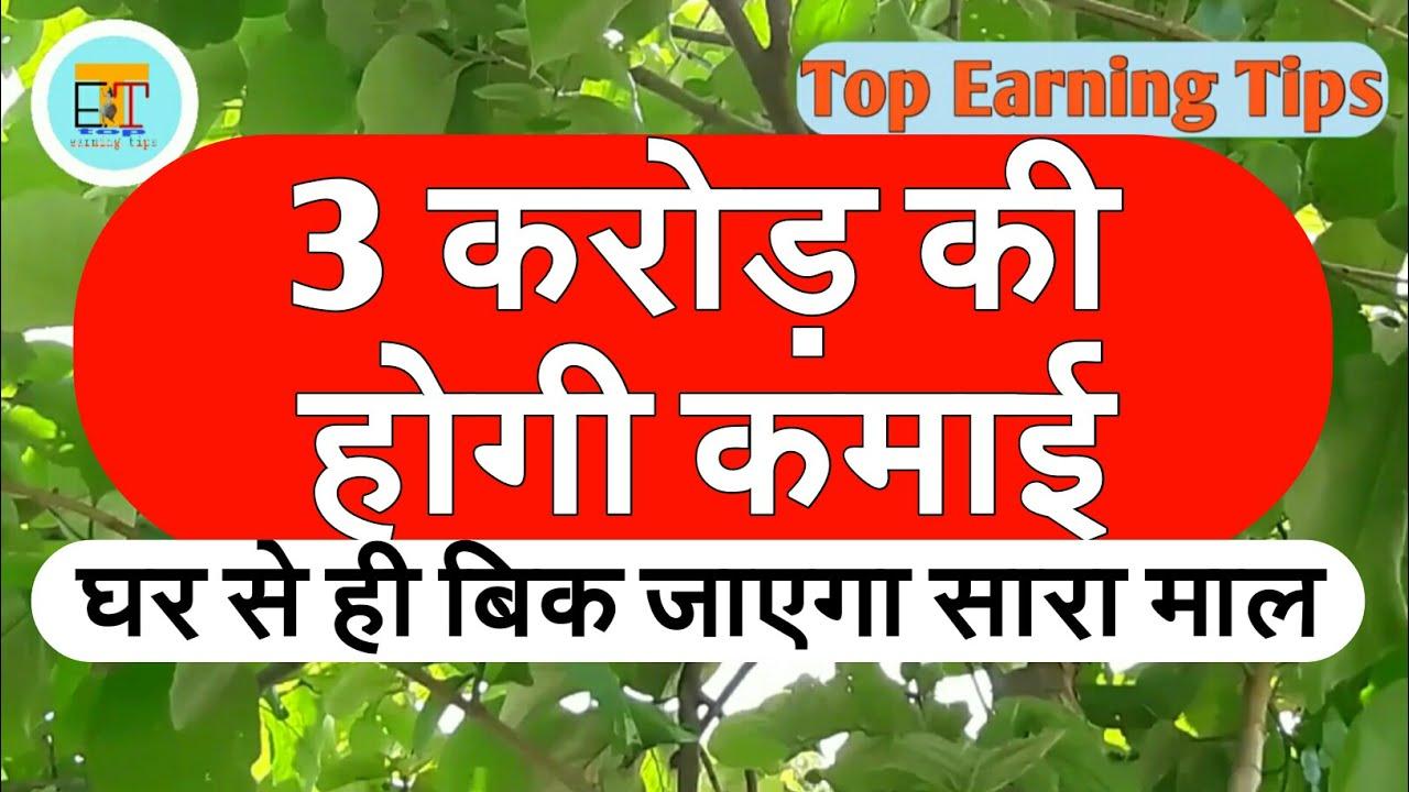Teak Cultivation Term Plan 3 Crore
