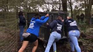 The Rescue of Maya Cougar by Big Cat Rescue thumbnail