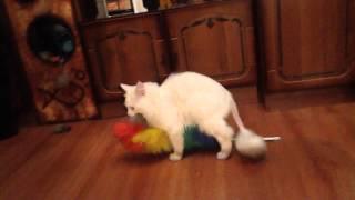 Кот и пипидастр