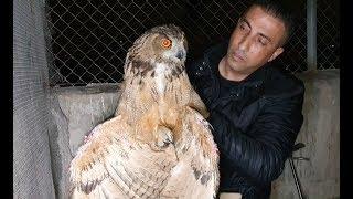 مطارة شرسة بيني و بين ثعلب قتل عشرات الطيور و الارانب مع جمال العمواسي