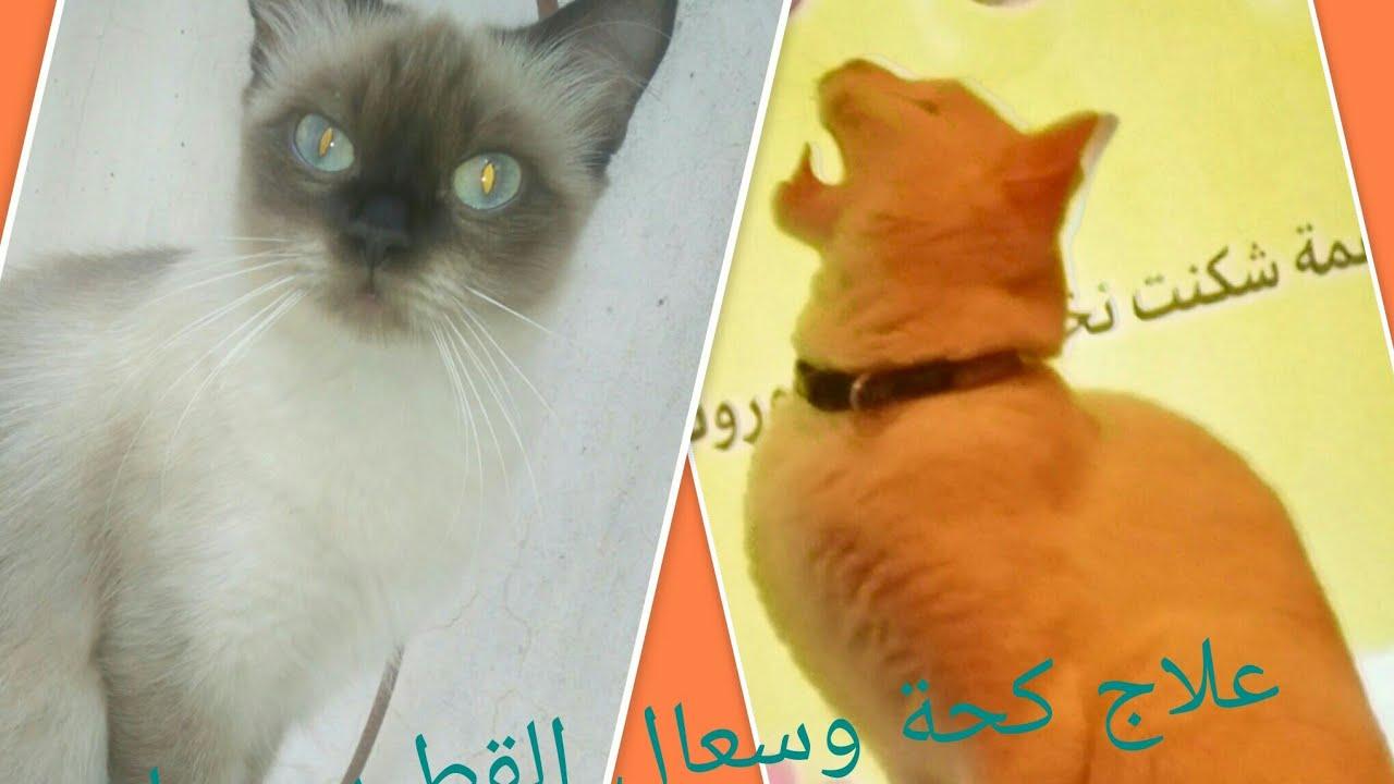 علاج سريع جدا وفعال لعلاج زكام القطط والكحة والسعال بمكون متوفر في كل بيت Youtube
