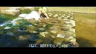 産まれてはじめての夏、川で泳いだよ☆彡.