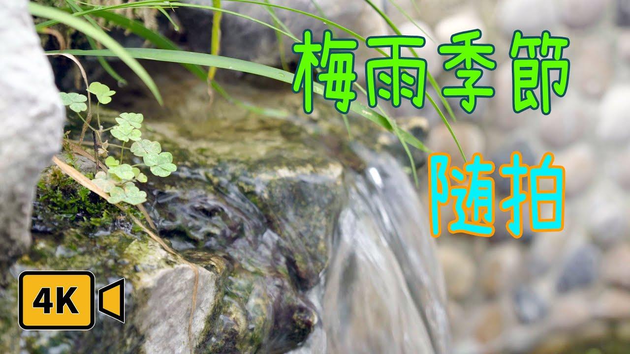 【龜池物語】黃梅天過後是盛夏!|龜池邊隨拍|療愈|巴西龜|4K Slog3|索尼A6500 - YouTube