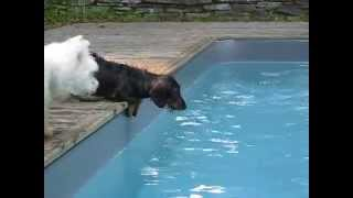 Can't keep Tucker out of the pool! thumbnail