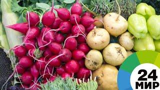 Погода не помешала: урожай овощей порадовал аграриев Ленобласти