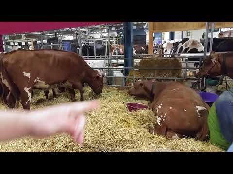Cows section at the 2018 Pennsylvania Farm Show